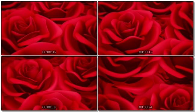 红色大朵玫瑰浪漫心型唯美婚礼背景视频模板