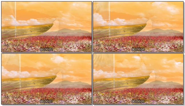 黄昏多彩花卉背景视频素材