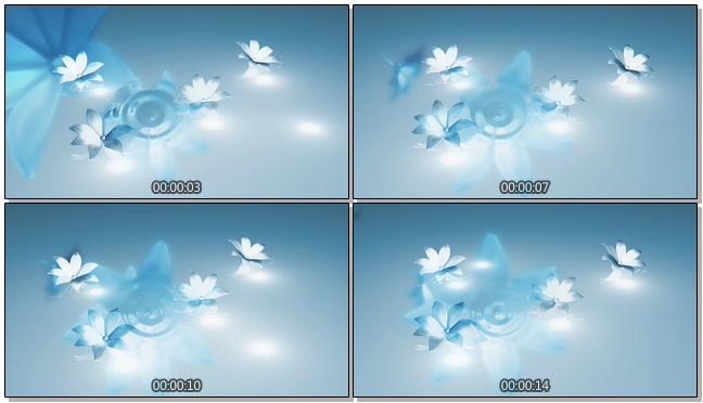 蓝色荷花倒影背景视频素材