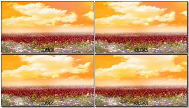 黄昏动态花海背景视频素材