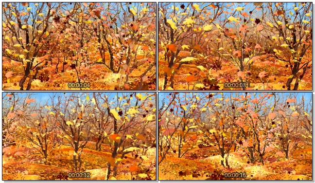 金色秋风落叶收获唯美浪漫背景视频素材