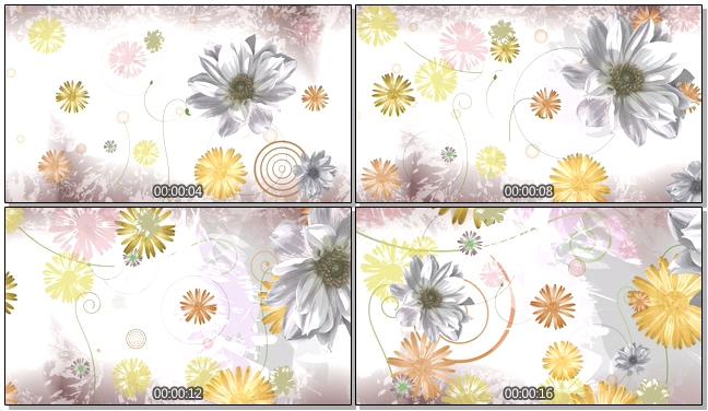 简洁清新大花朵唯美浪漫背景视频素材