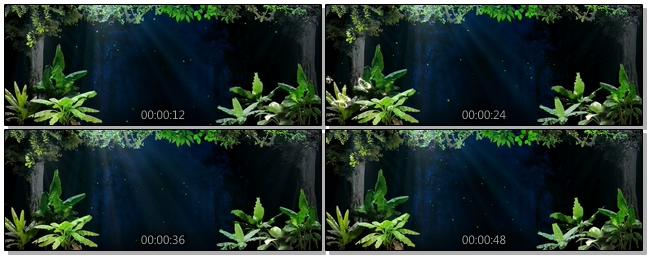 暗色温馨森林背景视频素材