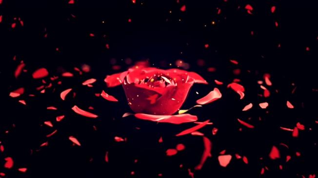 旋转3D玫瑰花背景视频素材