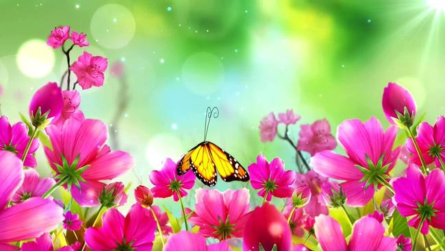 艳丽花朵蝴蝶音乐背景视频素材