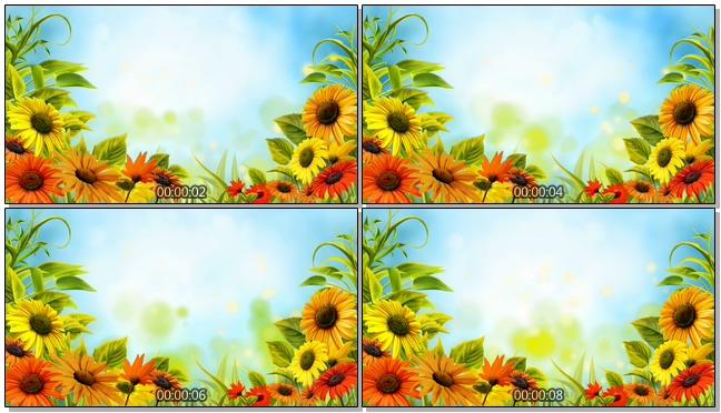 美丽向日葵蝴蝶背景视频素材