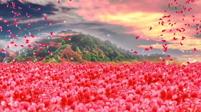 满山红艳艳映山红唯美杜鹃花模板