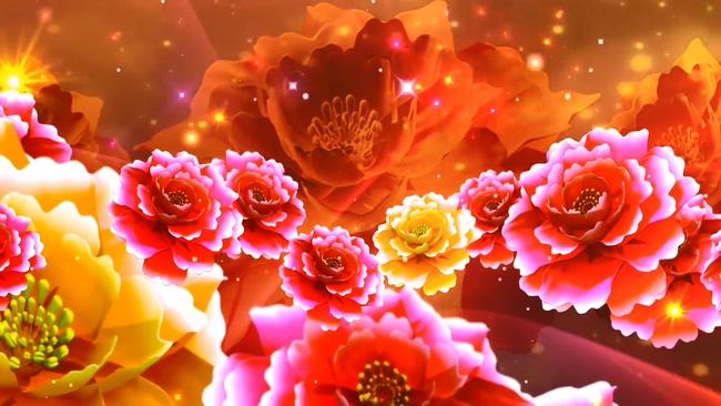 红色牡丹背景视频素材