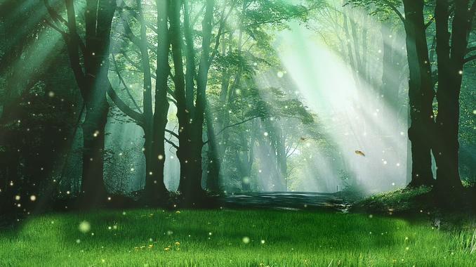 绿色唯美森林背景视频素材