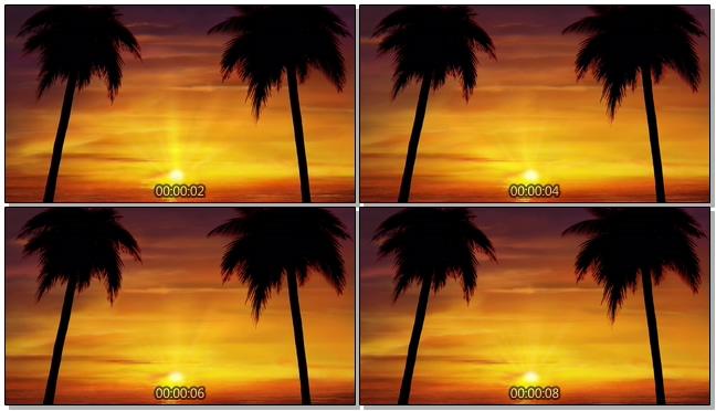 夕阳下的椰子树背景视频素材