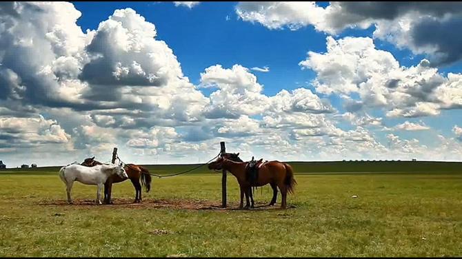 内蒙古呼伦贝尔大草原背景视频素材