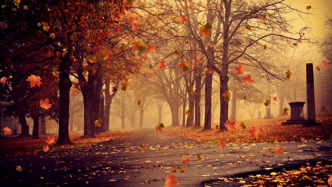 秋天落叶背景视频素材