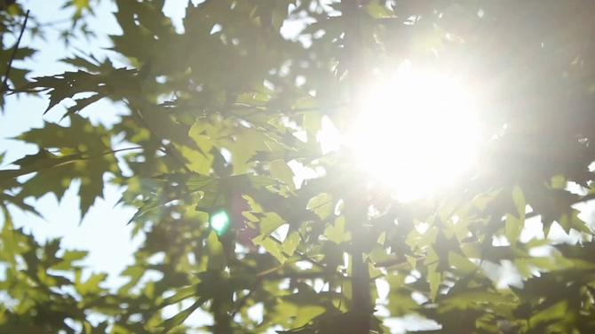 阳光树叶枫叶背景视频素材
