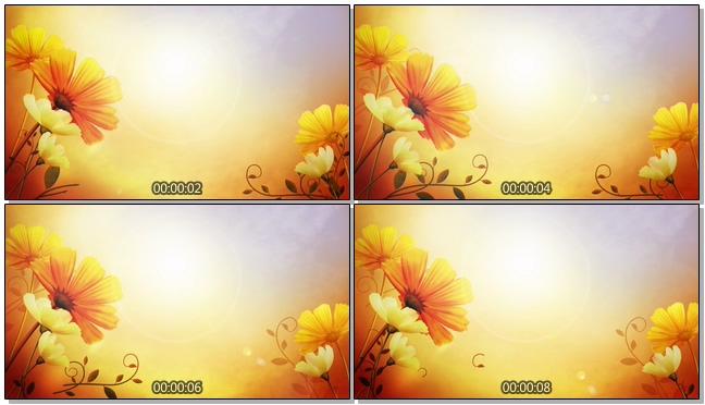 复古太阳花背景视频素材