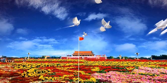 和平鸽飞翔欢度国庆的视频素材