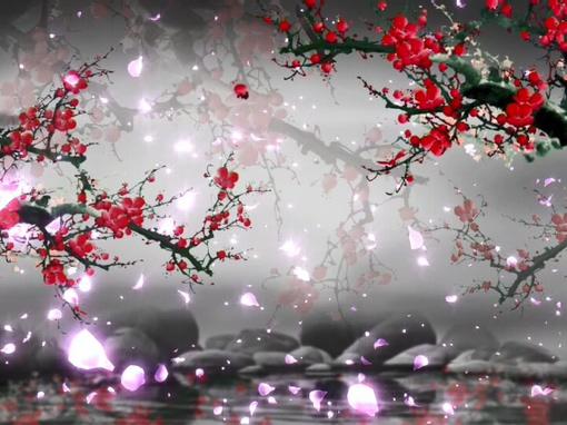 唯美梦幻的红梅花开视频素材