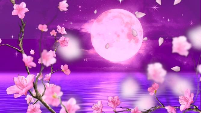 唯美梦幻的梅花花瓣飘落圆月的视频素材