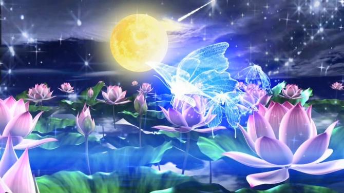 唯美梦幻的圆月荷花盛开的视频素材