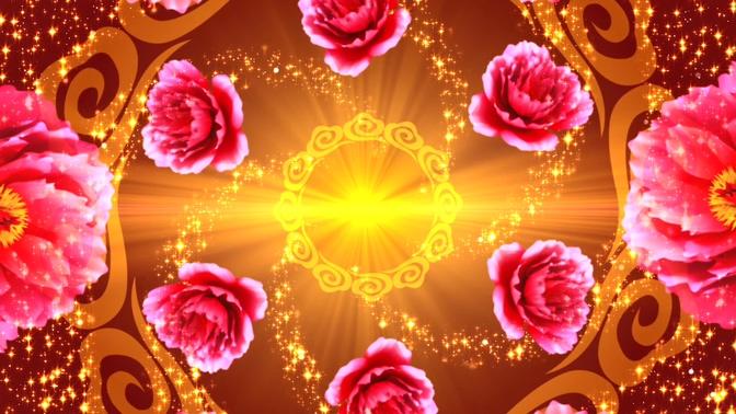 浪漫唯美的牡丹花朵旋转的视频素材