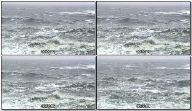 海鸥飞翔在海平面上的实拍视频