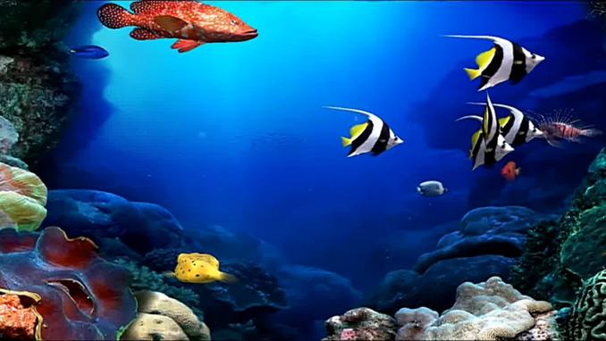 唯美梦幻的海底世界海鱼游动的实拍视频