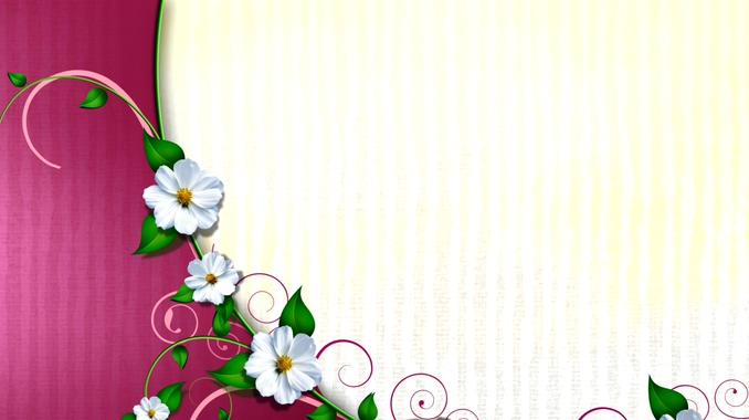 浪漫白色花朵盛开的边框视频素材