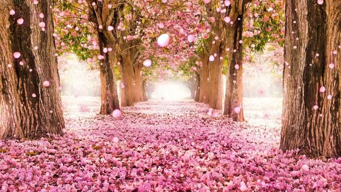 粉色唯美花瓣背景视频素材