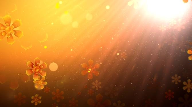金色唯美旋转花瓣背景视频素材