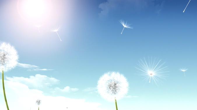 蓝色唯美天空蒲公英背景视频素材