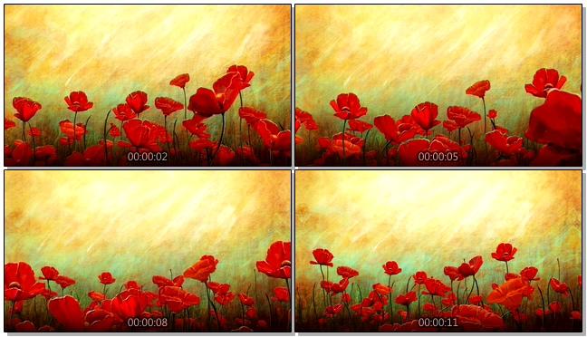 红色太阳花背景视频素材