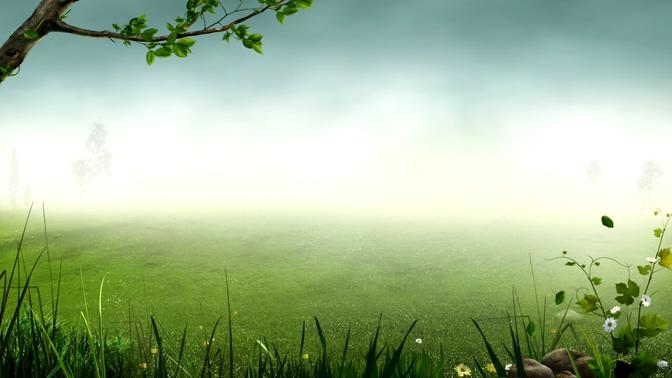 绿色草坪风景背景视频素材