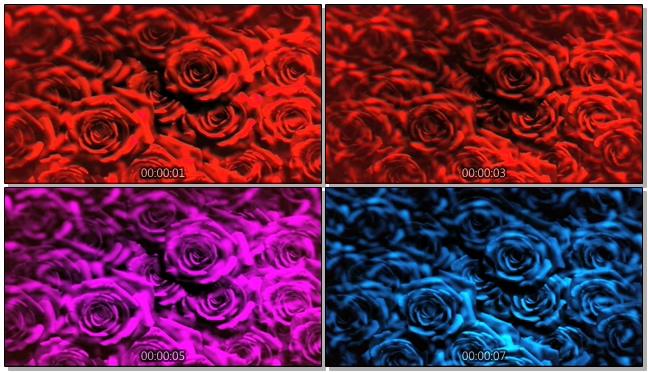红色浪漫玫瑰花背景视频素材