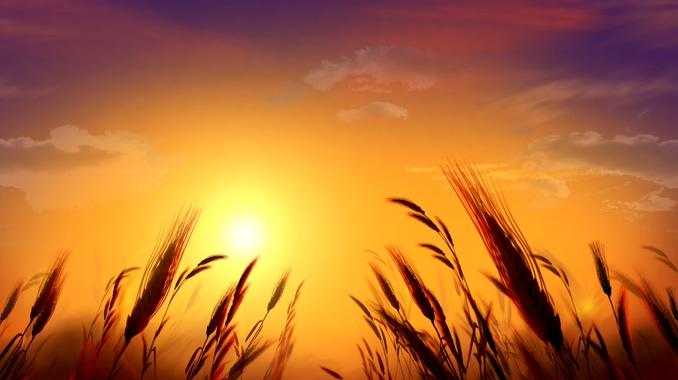 夕阳浪漫唯美花草背景视频素材