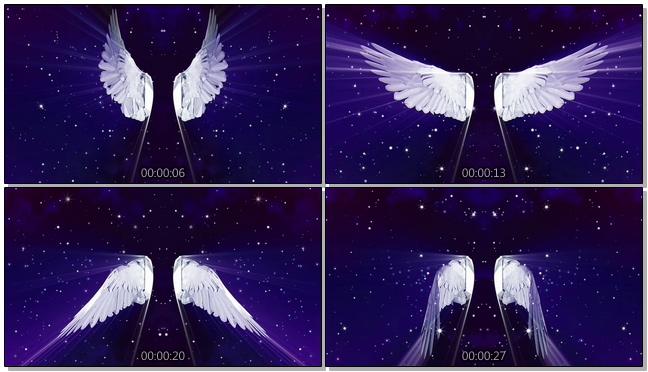 浪漫唯美的羽毛翅膀背景视频