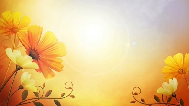 唯美梦幻的鲜花盛开视频素材