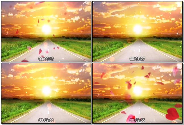 浪漫唯美的花瓣飘落在夕阳下的视频素材