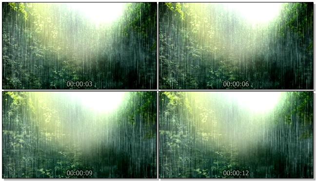 浪漫唯美的热带雨林视频素材