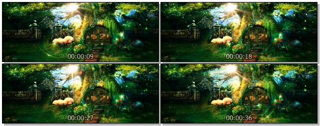 太阳旋转下的绿色森林视频素材