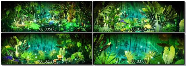 唯美梦幻的热带雨林视频素材(有音乐)