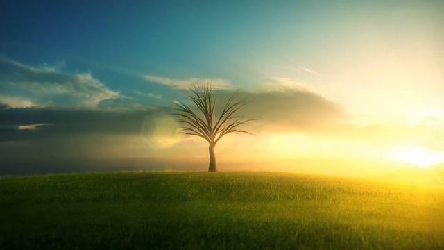 小树从发芽到长成大树的全过程视频素材