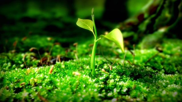 森林中鲜花发芽快速生长的视频素材