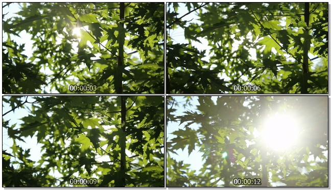 阳光透过树叶的视频素材