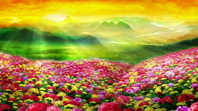 花瓣从花海间往天空飘去的视频素材