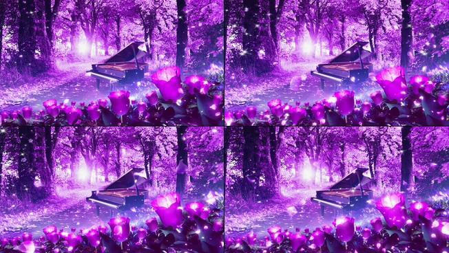 浪漫的紫色花海视频素材