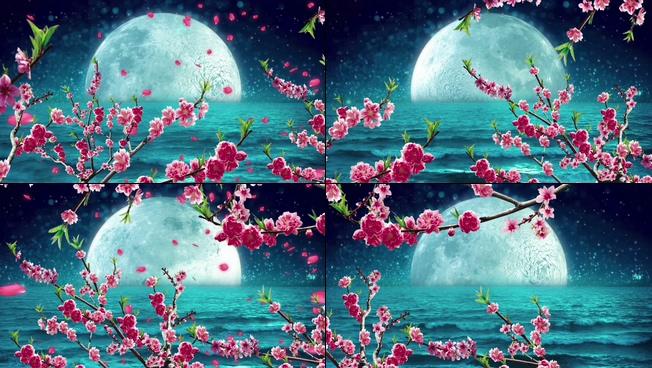 桃花从天而降的月圆之夜视频素材