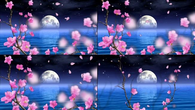 浪漫唯美的花前月下的视频素材