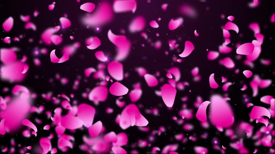 从天而降的浪漫粉红色花瓣背景视频