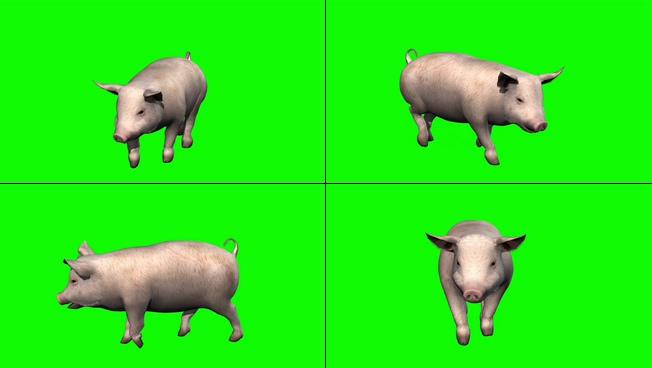 122310091猪 绿屏 高清