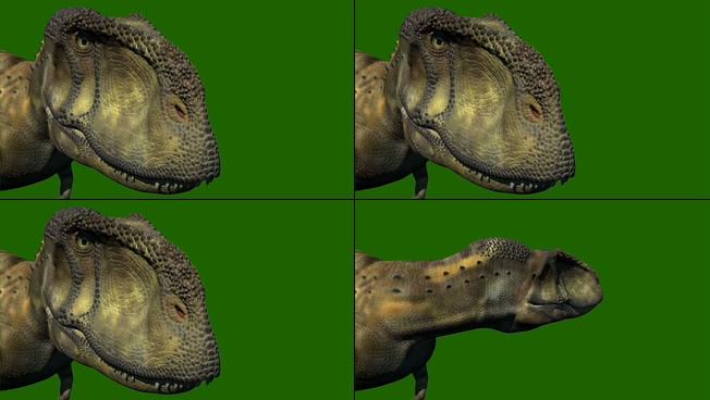 震撼大气的恐龙头部转动视频素材