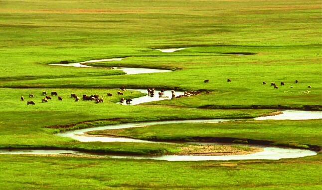草原美景蒙古包音乐背景视频素材